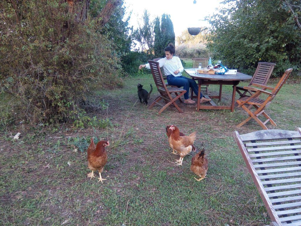 kury i kot w ogrodzie