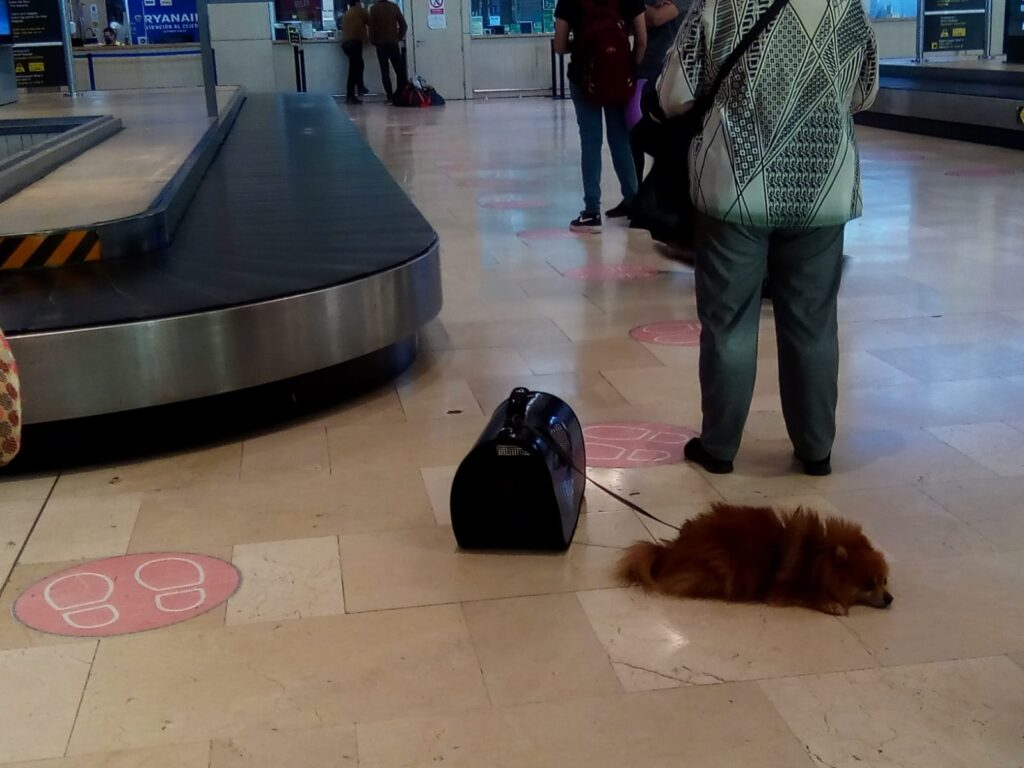 lotnisko Tenerife North
