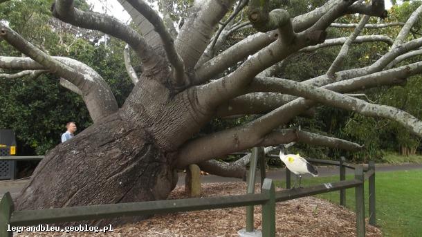 Ogród botaniczny Sydney