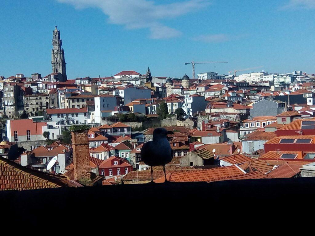 grudzień w Porto