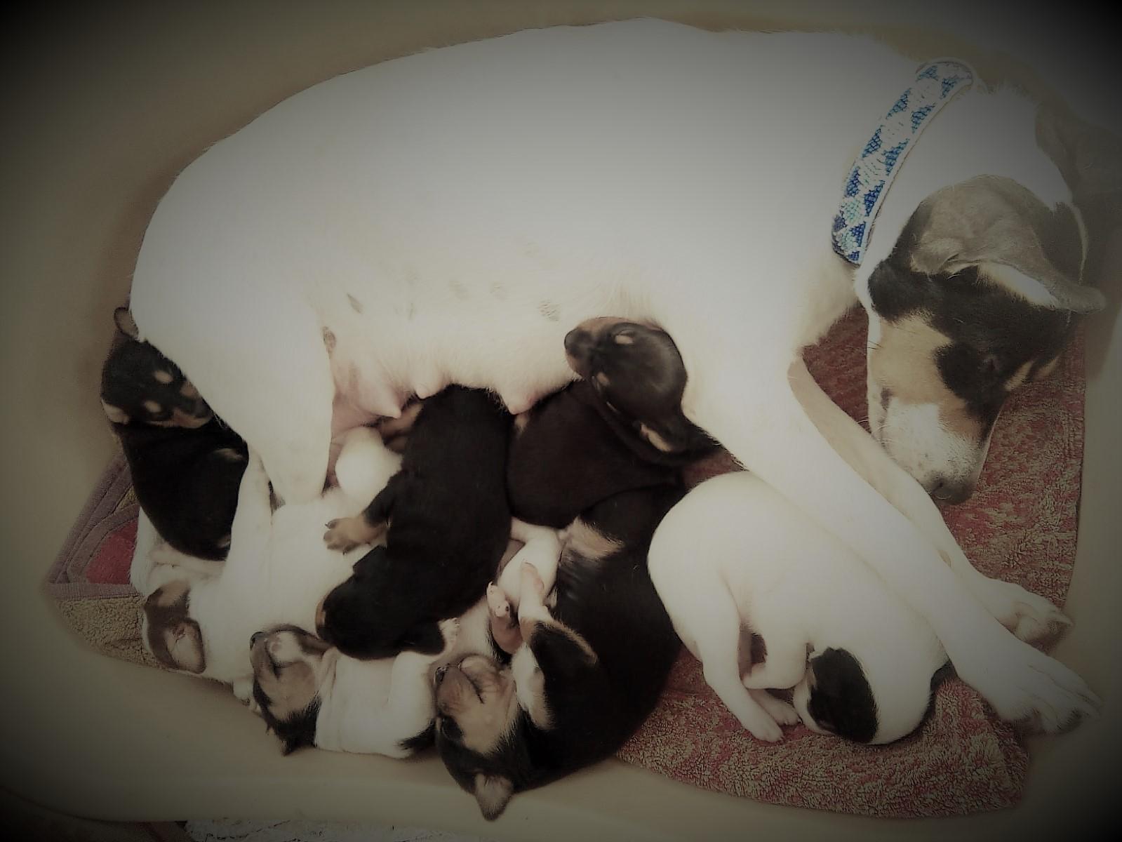 szczeniaki puppies