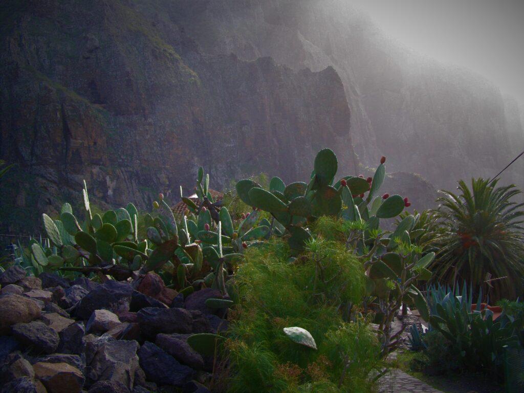kaktusy w Masca