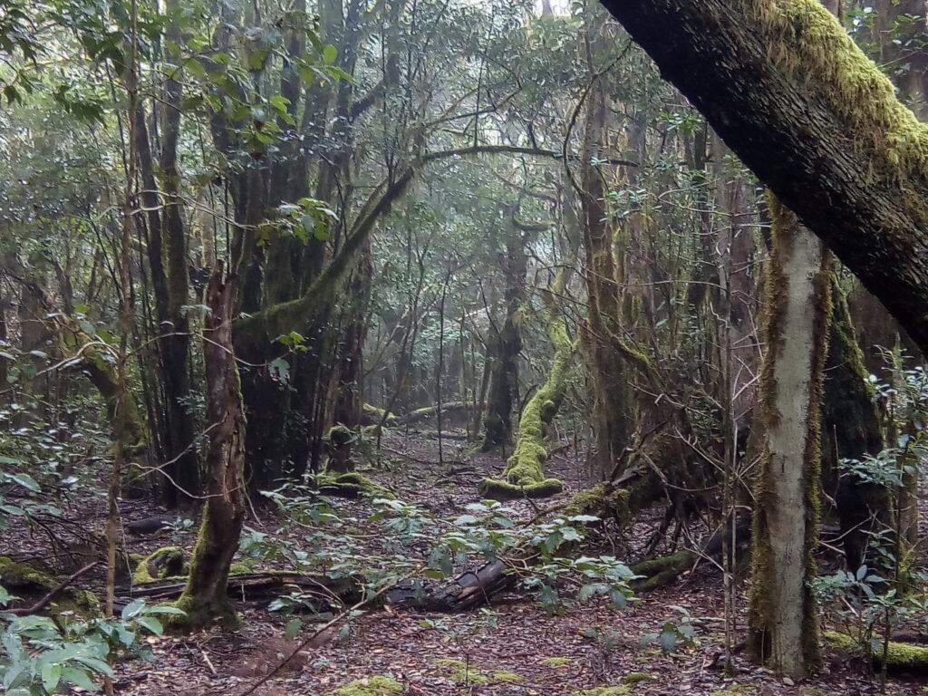 Park Narodowy Garajonay